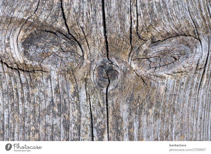 Isegrim | Alterserscheinungen Terrasse Holzbrett Tiergesicht Linie Blick alt bedrohlich gruselig grau Gefühle Stimmung Angst bizarr Natur skurril Umwelt