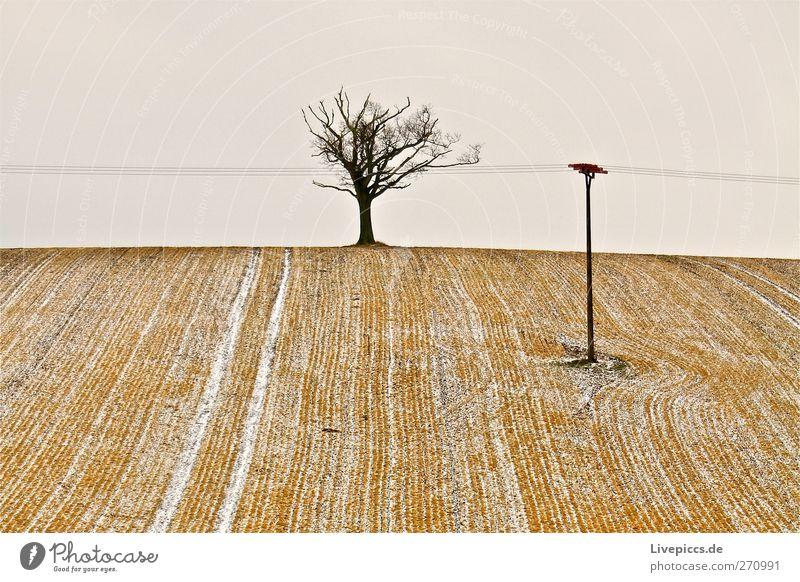 Bäumchen 1 Himmel Natur blau weiß Baum Pflanze Winter schwarz Umwelt Landschaft gelb kalt Schnee grau Erde Feld