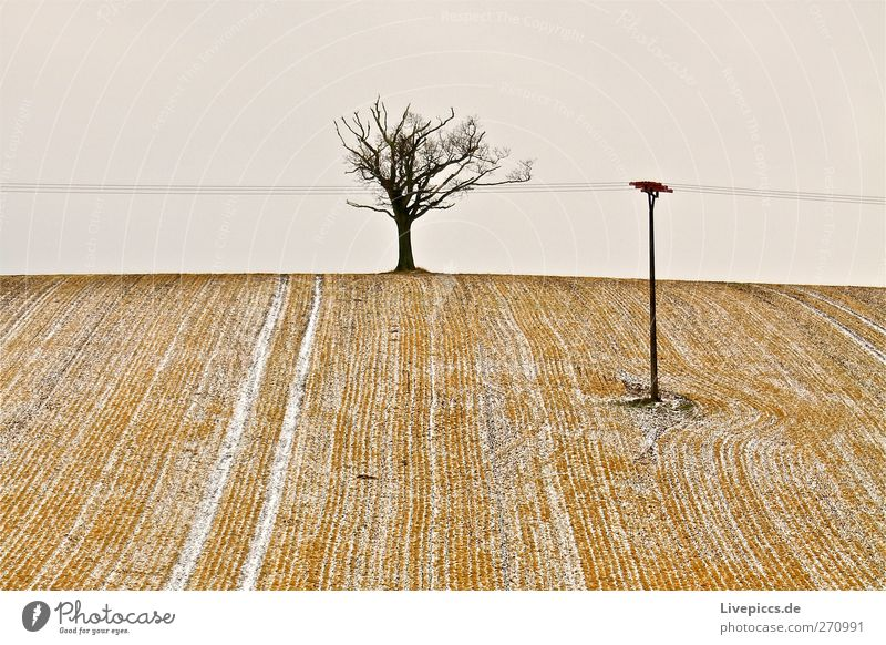 Bäumchen 1 Winter Umwelt Natur Landschaft Pflanze Erde Himmel schlechtes Wetter Schnee Baum kalt blau gelb grau schwarz weiß Feld Ackerbau Farbfoto