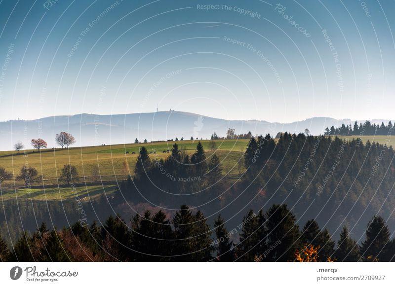 Lau Tourismus Natur Landschaft Wolkenloser Himmel Horizont Sommer Herbst Schönes Wetter Baum Fichtenwald Wiese Wald Feldberg Erholung schön Stimmung ästhetisch