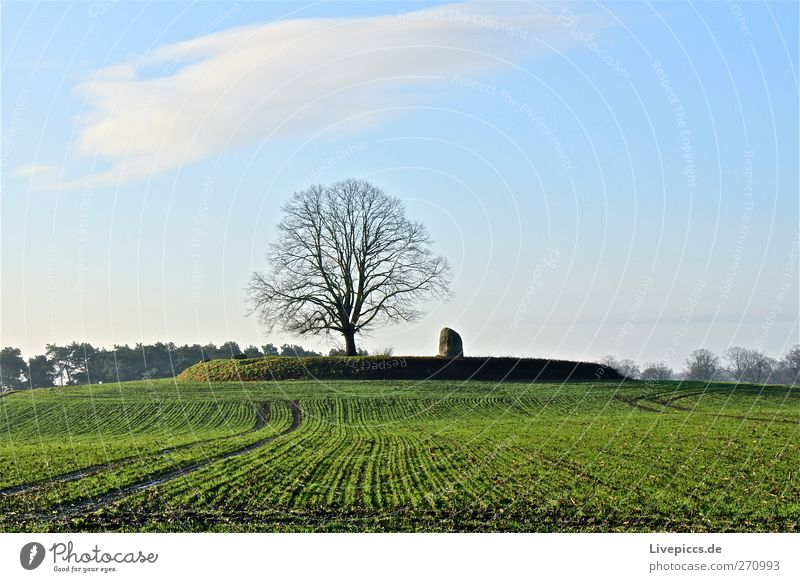 Bäumchen 2 Umwelt Natur Landschaft Pflanze Erde Himmel Wolken Schönes Wetter Baum Feld Freundlichkeit Fröhlichkeit natürlich blau grau grün weiß Wiese Ackerbau