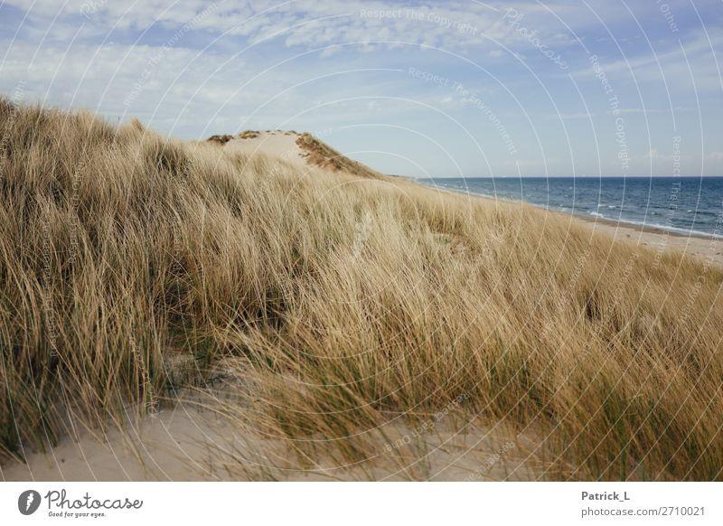 Kattegat Himmel Ferien & Urlaub & Reisen blau schön grün Wasser Landschaft Freude Ferne Strand gelb natürlich Küste Glück Gras Sand