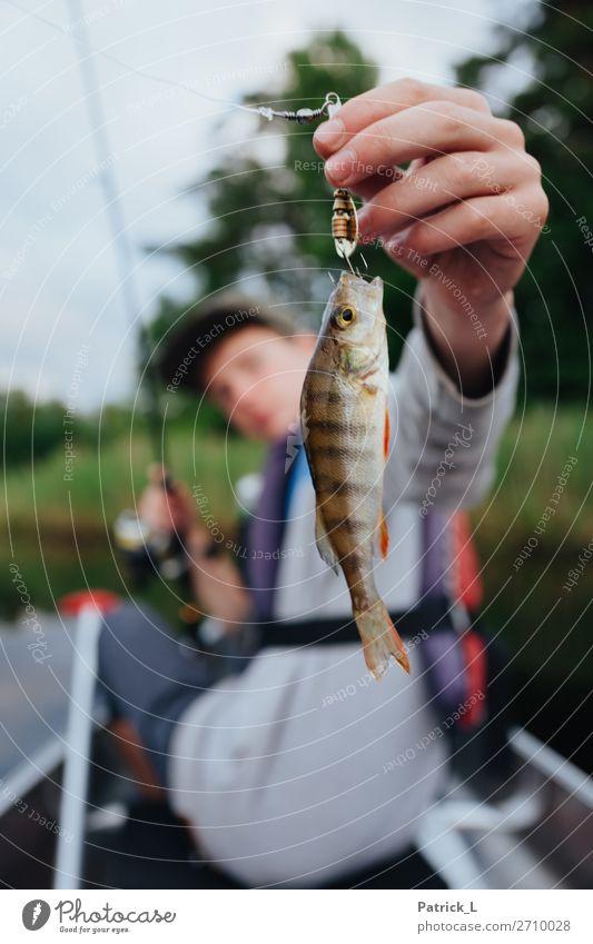 Barschalarm Wildtier 1 Tier fangen hängen exotisch Ungerechtigkeit Abenteuer Erfolg Fisch rot grün braun Streifen Petri Heil Angeln Kanu Kanutour Haken