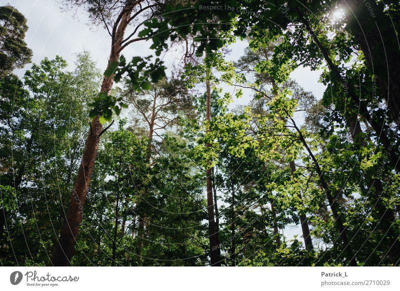 Waldig Himmel Natur Pflanze grün Baum Erholung Blatt ruhig Umwelt natürlich wild Wetter Wachstum Kraft ästhetisch