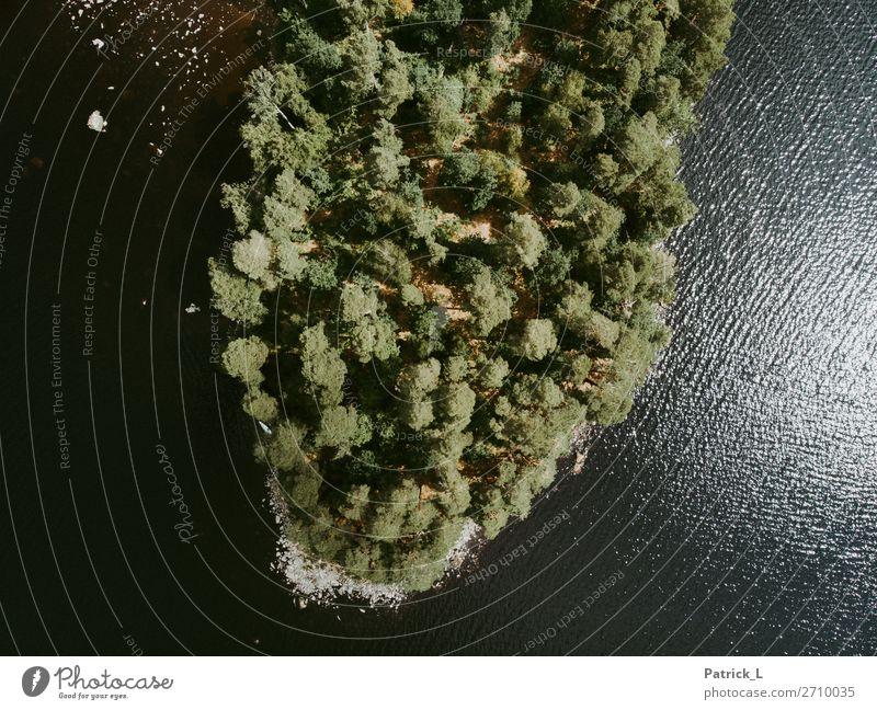 Inselleben Umwelt Natur Wasser Sommer Pflanze Grünpflanze Wald Seeufer ästhetisch außergewöhnlich exotisch nachhaltig grün Kraft Sicherheit Schutz ruhig