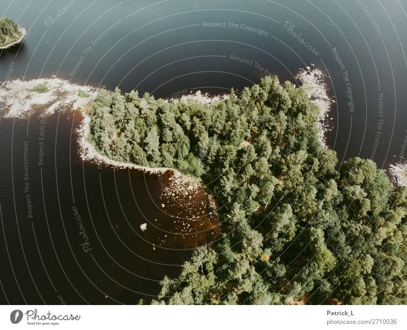 Inseltraum Umwelt Natur Landschaft Urelemente Wasser Sommer Baum Wildpflanze Wald Seeufer Schweden Europa Menschenleer Unendlichkeit nachhaltig natürlich grün