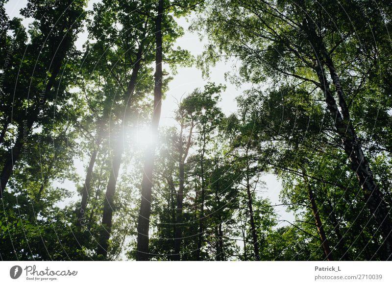 Waldwerk Umwelt Natur Pflanze Sommer Baum Blatt Grünpflanze Wildpflanze atmen berühren Bewegung schaukeln Wachstum Häusliches Leben ästhetisch nachhaltig grün