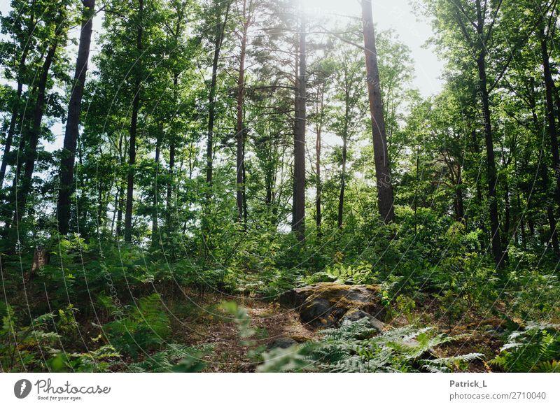 Waldstadt Natur Sommer Klima Pflanze Baum Gras Sträucher Farn Wildpflanze hängen elegant gigantisch schön einzigartig natürlich wild grün Euphorie Kraft Mut