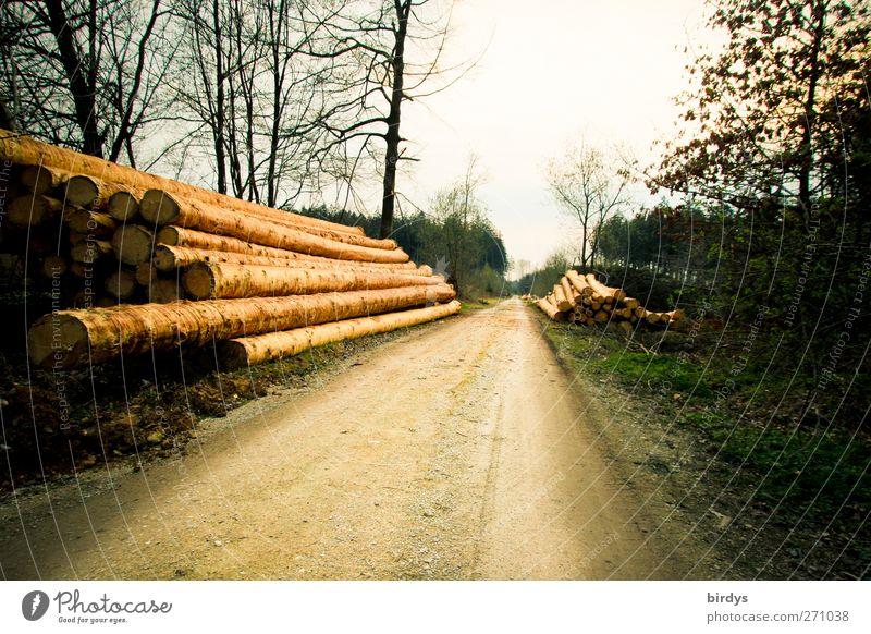 Langholz Natur Baum Wald Umwelt Frühling Wege & Pfade Klima liegen leuchten trist Wandel & Veränderung viele Landwirtschaft lang Fußweg Baumstamm