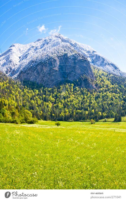 Himmel Natur blau grün Baum Pflanze Blume Umwelt Landschaft gelb Wiese Schnee Berge u. Gebirge Gras Frühling grau