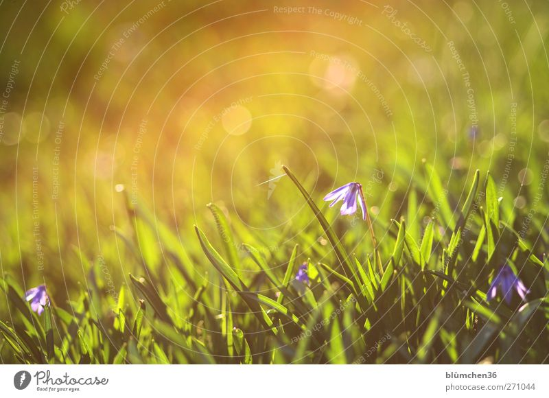 Frühling mit Beleuchtung Natur grün schön Pflanze Blume gelb Leben Garten Blüte Stimmung glänzend frisch leuchten niedlich Romantik