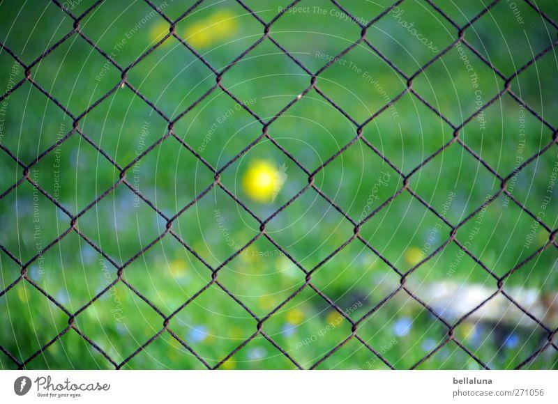 Hiddensee   Meine Mitte Natur Pflanze Sonnenlicht Frühling Schönes Wetter Blüte Wildpflanze Garten Ostsee blau gelb grün Gras Rasen Wiese Wiesenblume Zaun