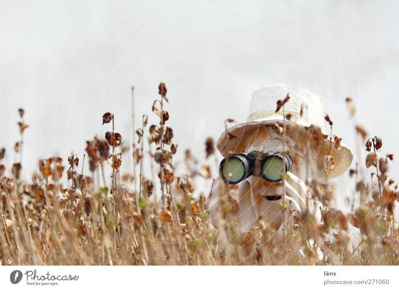 Hiddensee l Hiddenseh Mensch maskulin Kopf 1 Fernglas beobachten Neugier Misstrauen entdecken Hecke Hut Deckung verstecken Farbfoto Außenaufnahme