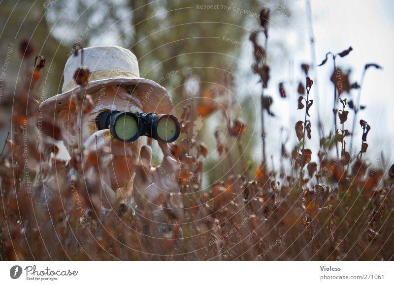 Hiddensee | Hiddenseh Kopf beobachten Neugier Hut entdecken verstecken Fernglas Hecke Deckung Misstrauen