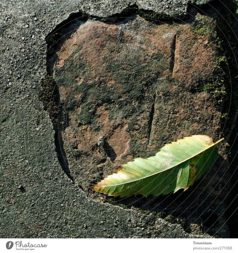 Denkmal. grün Blatt ruhig Umwelt Gefühle grau Stein braun Zufriedenheit liegen Beton authentisch Urelemente Zeichen Vertrauen Am Rand
