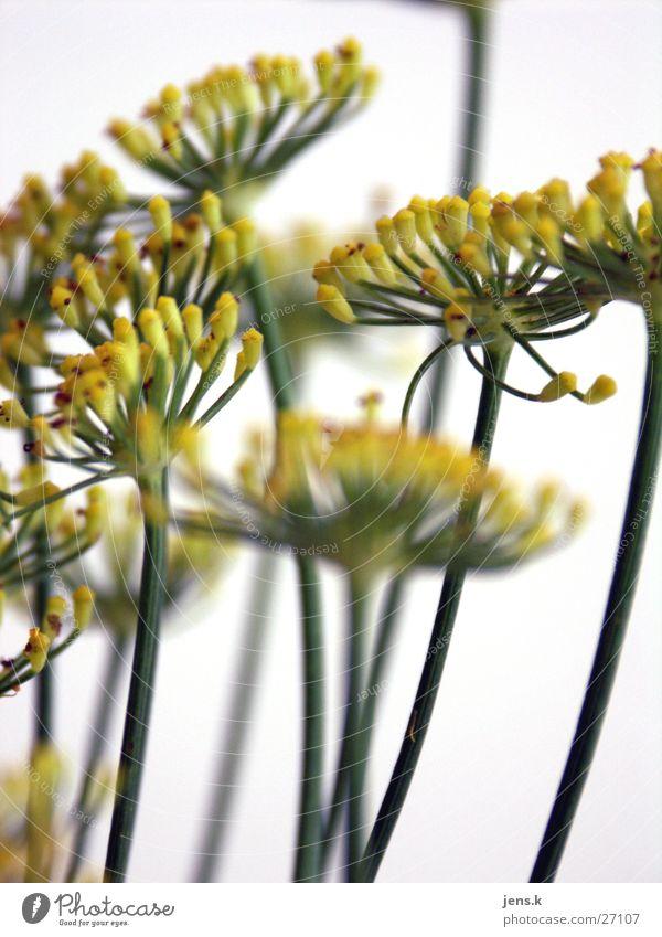 Blume Blüte grün gelb Stengel Detailaufnahme
