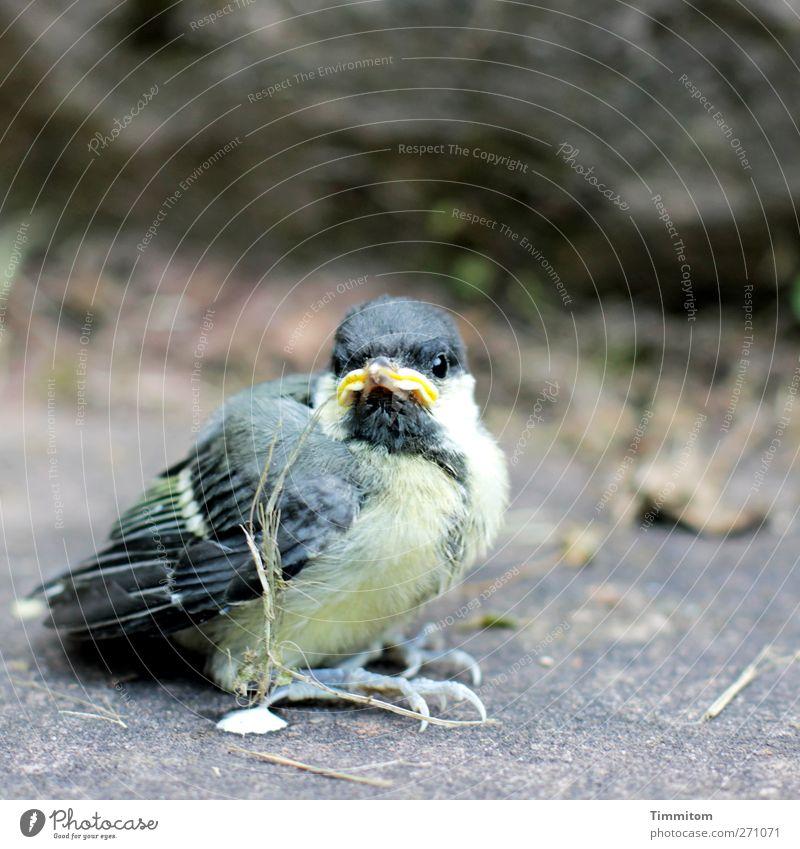 Kurzes Leben Natur Tier schwarz Umwelt Gefühle grau Garten Vogel Angst warten festhalten Sorge Schwäche Heidelberg flugunfähig