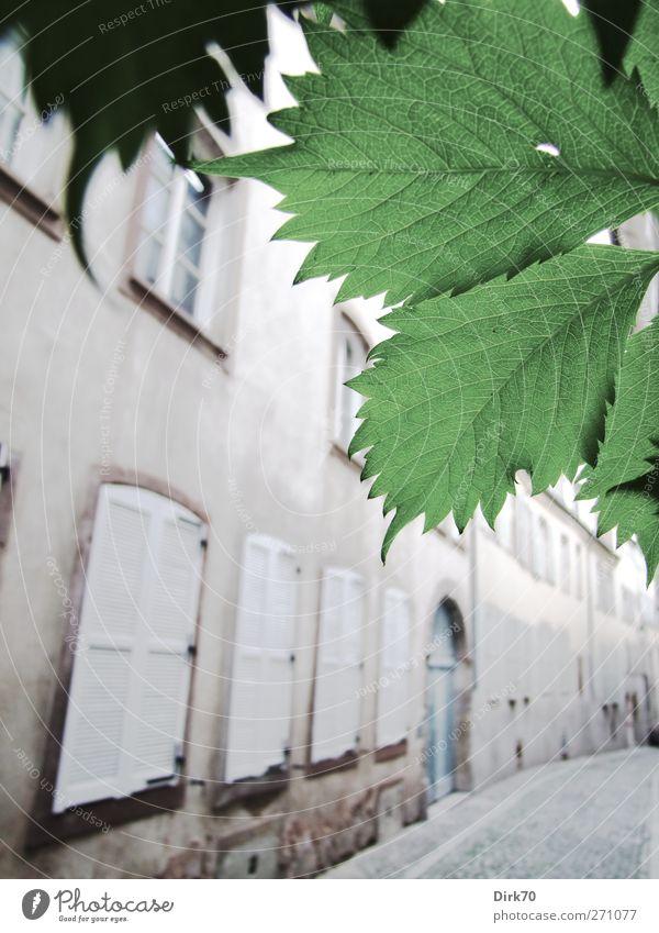 Lichte Gasse, Blätterschmuck blau weiß grün Stadt schön Pflanze Blatt Haus Fenster Wand Architektur grau Mauer hell Tür Zufriedenheit