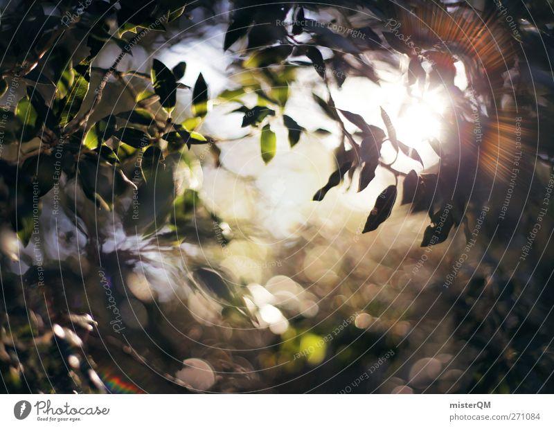 in view of heaven. Natur grün Kunst ästhetisch leuchten Zukunft Hoffnung ökologisch mystisch strahlend aufwachen Waldlichtung Naturschutzgebiet Blendenfleck