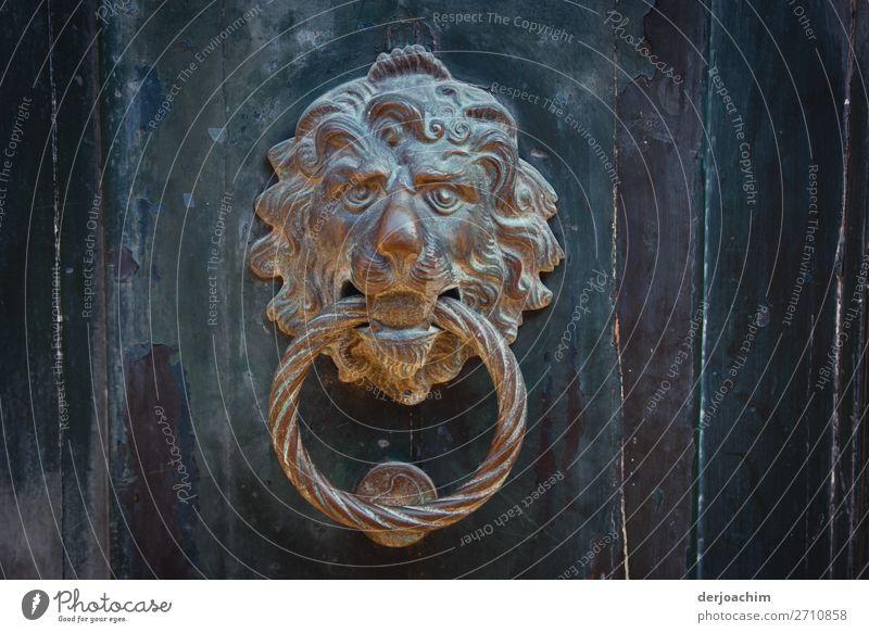 der Löwe an der Tür. Ein Türklopfer aus Matall mit Ring im Maul. Die Tür besteht aus Holz. Design Freude Ausflug Sommer Schönes Wetter Stadt Venedig Italien
