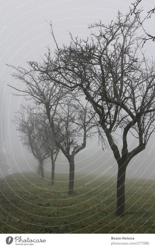 Auf trübe Tage folgt der Sonnenschein Himmel Natur grün Baum Einsamkeit Landschaft dunkel Wiese Gefühle grau braun Regen Wetter Nebel natürlich warten