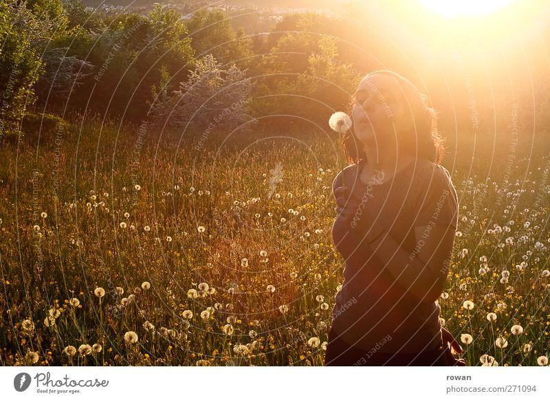 pusteblume Mensch feminin Junge Frau Jugendliche 1 Landschaft Sonne Sonnenaufgang Sonnenuntergang Sonnenlicht Frühling Sommer Schönes Wetter Gras Wiese Glück