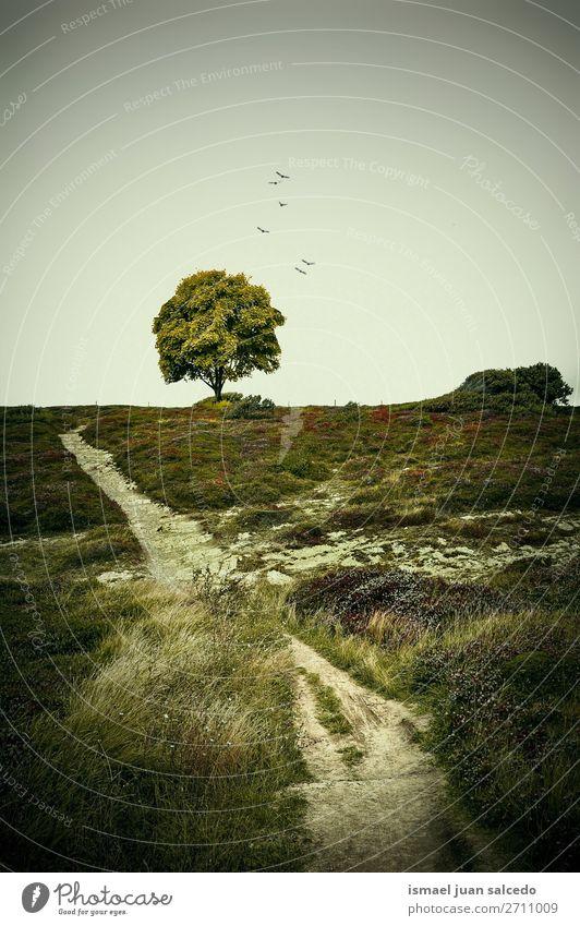 Ferien & Urlaub & Reisen Natur grün Landschaft Baum Erholung ruhig Wald Berge u. Gebirge Herbst Platz Spanien Gelassenheit Tapete Phantasie Ausflugsziel