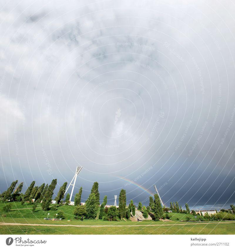 mauerparkspektakel Natur grün Sommer Umwelt Landschaft Berlin Park Unwetter Gewitter Regenbogen Stadion Wolkenhimmel Regenwolken Sportstätten Wolkendecke Pappeln