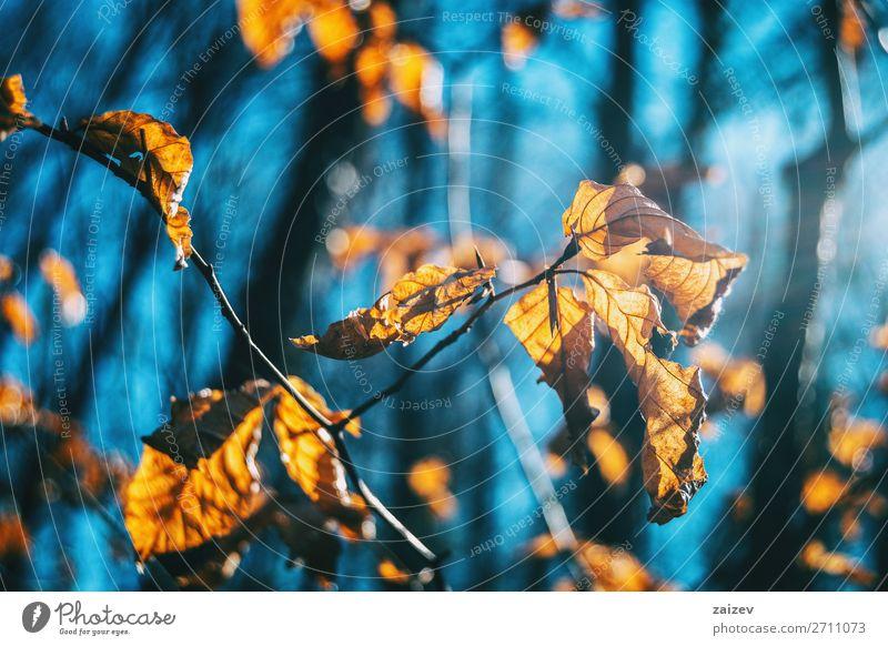 Nahaufnahme einiger Herbstblätter an einem Ast schön Leben Tapete Natur Pflanze Blatt Traurigkeit Wachstum natürlich Hoffnung Tod Beautyfotografie herbstlich