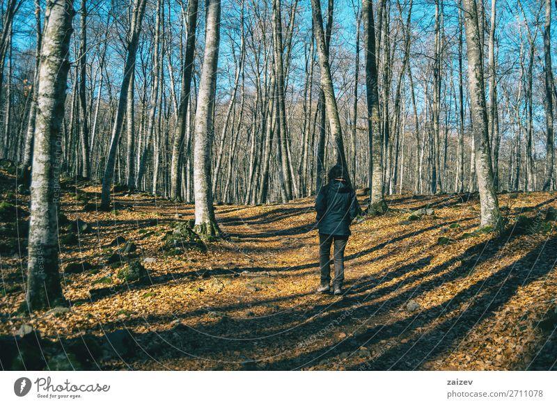 Ein Mädchen wandert durch den Schatten der Bäume in einem herbstlichen Wald schön Erholung Meditation Ferien & Urlaub & Reisen Tourismus Ausflug Abenteuer