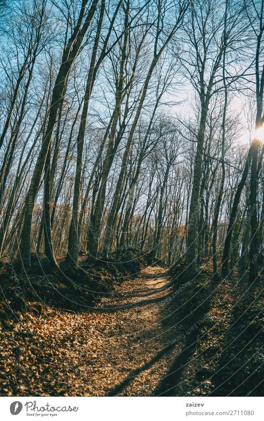 Ein Weg in einem Herbstwald Abenteuer Sonne wandern Natur Landschaft Baum Blatt Wald Wege & Pfade Gelassenheit Komplettlösung Gang Fußweg vertikal