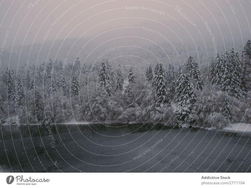 Tannenwald mit Schnee bedeckt Wald Winter Natur weiß Berge u. Gebirge Hügel kalt Baum Frost Landschaft Eis Jahreszeiten Holz Beautyfotografie Fichte schön