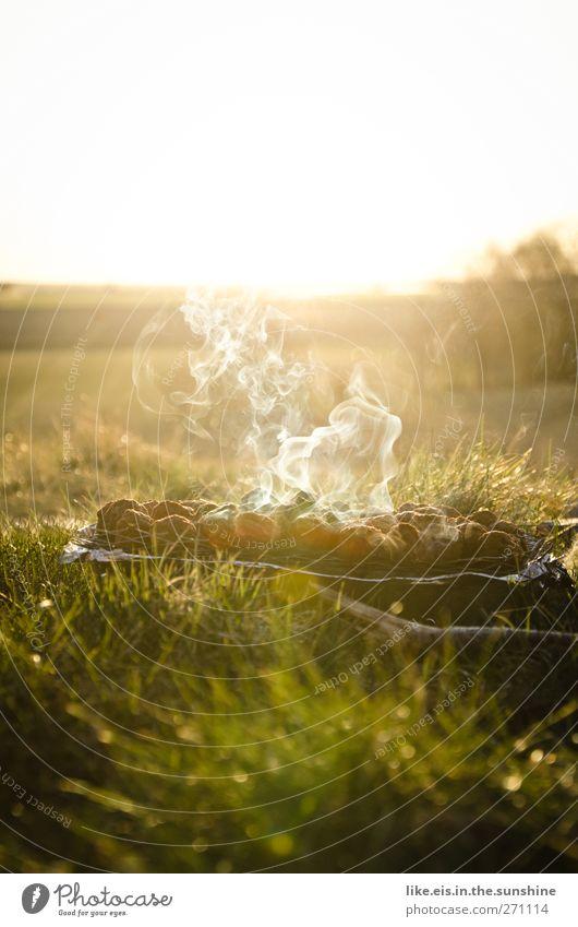 Sunset-grillen*** Natur Baum Sommer Freude Erholung Landschaft Ernährung Wiese Gras Garten Park Zufriedenheit Freizeit & Hobby Ausflug Abenteuer Lifestyle