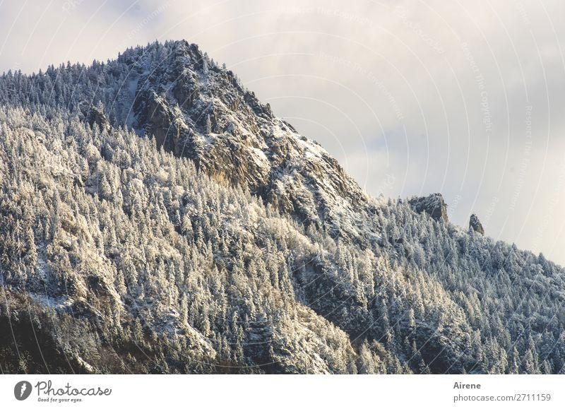 Puderzuckerberg Landschaft Himmel Winter Schnee Nadelwald Wald Felsen Alpen Berge u. Gebirge Gipfel Schneebedeckte Gipfel Bergwald groß kalt oben weiß