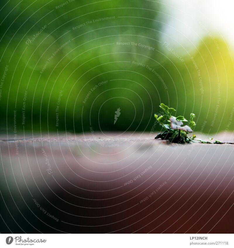 Aus der Sicht einer Ameise Natur Pflanze Sommer Blatt Tier Umwelt Wand Garten Mauer Beginn Perspektive Schönes Wetter exotisch Schwäche Grünpflanze