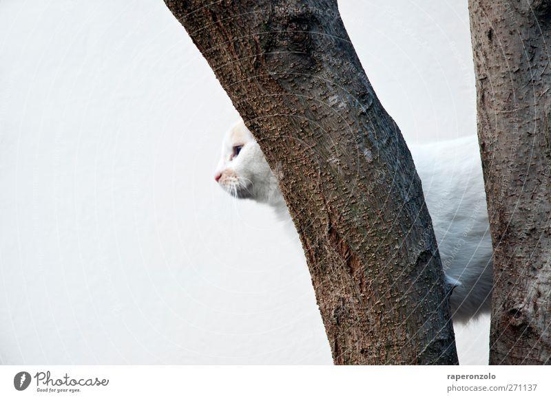 Beware of the cat Baum Tier Haustier Katze 1 Jagd weiß Coolness Wachsamkeit Einsamkeit Konzentration Baumrinde Klettern rückwärts Hintergrundbild Hauskatze