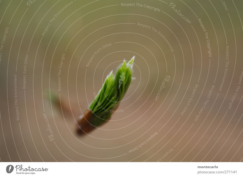 Neuanfang.. Umwelt Natur Pflanze Frühling Schönes Wetter Sträucher Blatt Grünpflanze Nutzpflanze Wildpflanze authentisch dünn einfach frisch neu wild weich