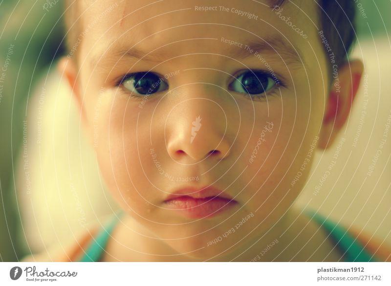 neugierig Mensch Kind Junge Leben Haut Kopf Gesicht Auge Ohr Nase Mund Lippen 1 1-3 Jahre Kleinkind Denken Blick Neugier Interesse Farbfoto Nahaufnahme