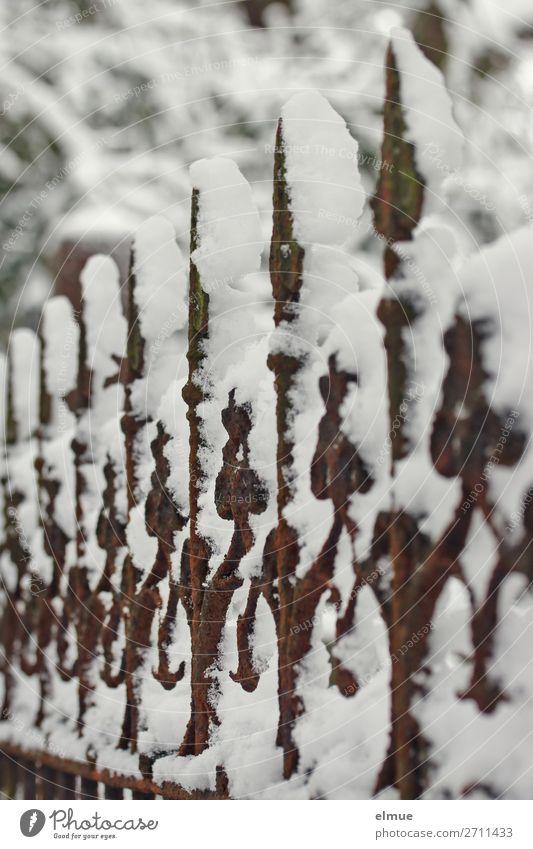 eingeschneiter Zaun Kunstwerk Winter Eis Frost Schnee Park Metall Rost Pfeil alt dunkel kalt Romantik Gelassenheit ruhig Einsamkeit ästhetisch bizarr Netzwerk