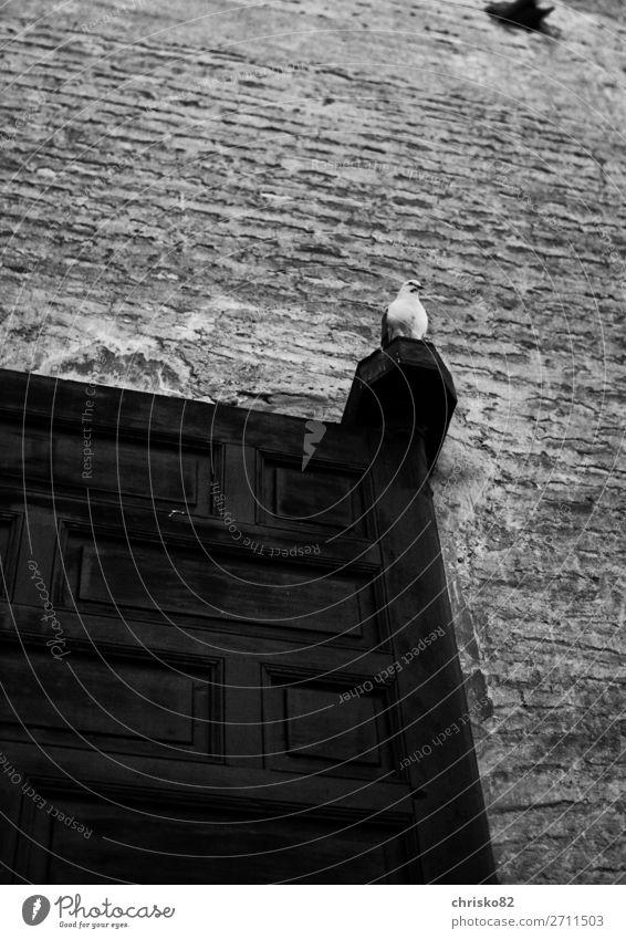 Der Wächter des Palastes Stadt Tier ruhig Vogel frei elegant Wildtier Kraft sitzen ästhetisch warten beobachten Coolness Sehenswürdigkeit Sicherheit Altstadt