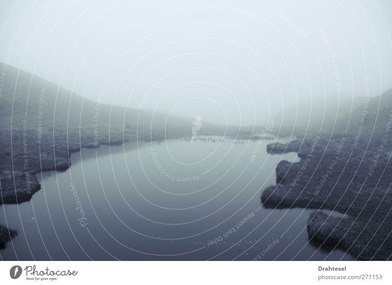 Verirrt im Nebel ruhig Abenteuer Ferne wandern Umwelt Natur Landschaft Luft Wasser Wetter schlechtes Wetter Gras Moos Flussufer frieren Unendlichkeit gruselig