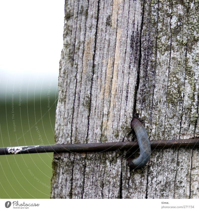 Lebenslinien #44 alt Holz Metall Feld Landwirtschaft Zaun Grenze Kontrolle Moos Draht verwittert Forstwirtschaft Befestigung Entschlossenheit
