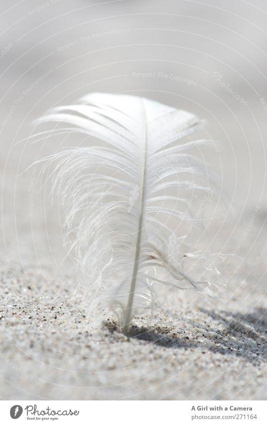 Hiddensee l life should be as light as a feather ... Natur weiß schön Sonne Strand Umwelt Sand hell stehen Feder Schönes Wetter Sauberkeit nah fest gekrümmt