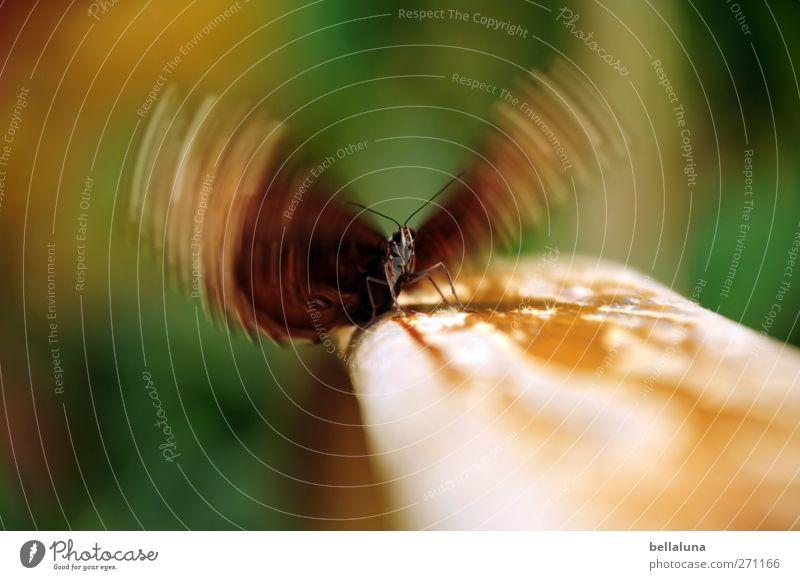 250 Flügelschläge Natur schön Pflanze Tier Holz Wildtier außergewöhnlich natürlich Sträucher einzigartig Geländer Tiergesicht Schmetterling Treppengeländer