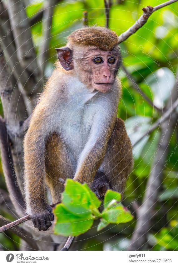 Aufmerksam Ferien & Urlaub & Reisen Natur Baum Tier Wald Ferne Tierjunges Umwelt Tourismus Freiheit Ausflug Wildtier Abenteuer Sträucher beobachten entdecken
