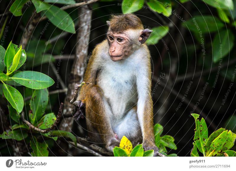 Wo ist das Wochenende...??? Ferien & Urlaub & Reisen Natur Landschaft Baum Tier Wald Ferne Umwelt Tourismus Freiheit Ausflug Wildtier Abenteuer Sträucher