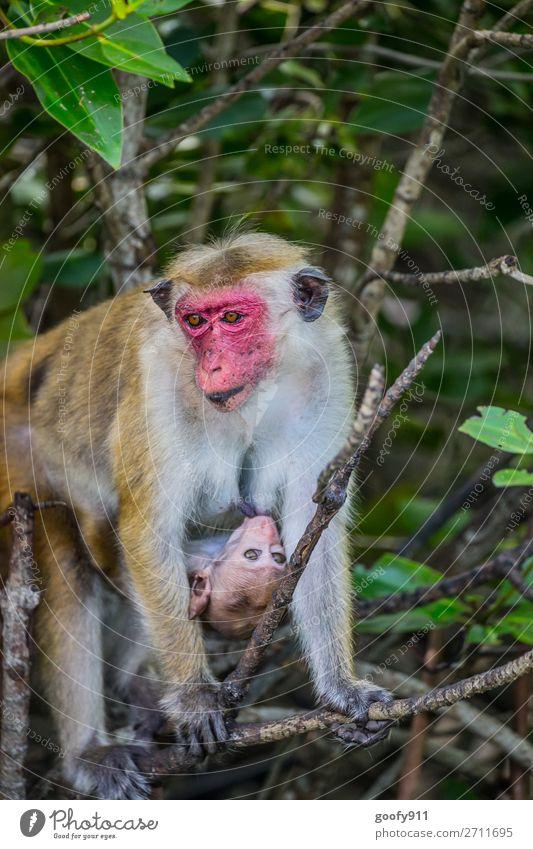 Makakenmutter mit Baby Ferien & Urlaub & Reisen Natur Baum Tier Wald Ferne Tierjunges Umwelt Tourismus Freiheit Ausflug Wildtier Abenteuer Sträucher beobachten
