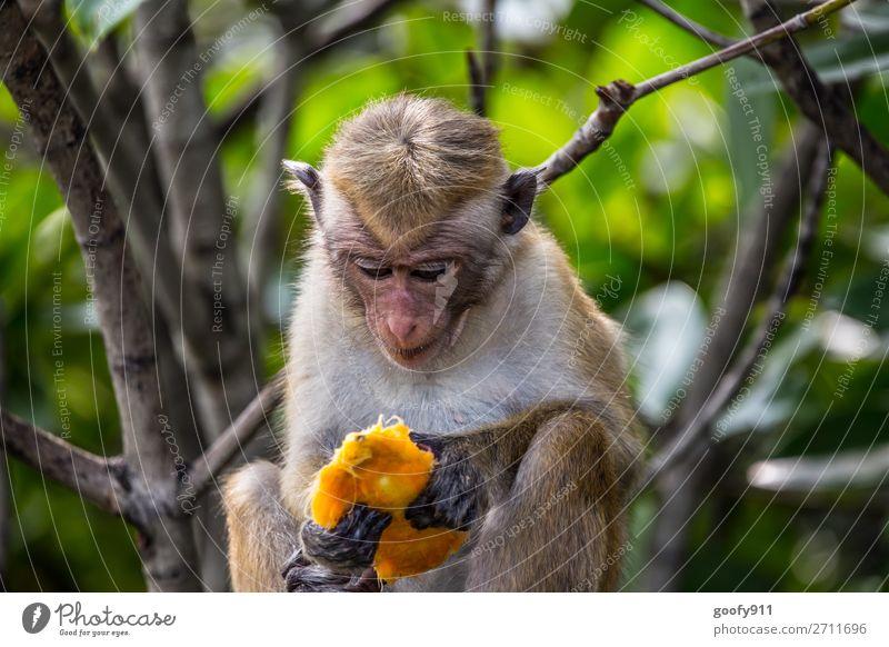 Essbar...? Ferien & Urlaub & Reisen Natur Baum Tier Wald Ferne Umwelt Tourismus Freiheit Ausflug elegant Wildtier sitzen Abenteuer genießen Sträucher