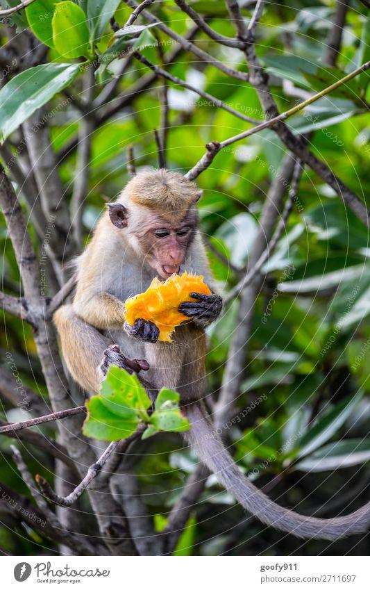 Genußvoll zubeißen Ferien & Urlaub & Reisen Natur Baum Tier Wald Ferne Umwelt Tourismus Freiheit Ausflug Wildtier Abenteuer Sträucher beobachten entdecken