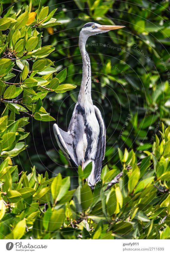 Auf Beobachtungsposten Ferien & Urlaub & Reisen Natur Pflanze Tier Ferne Umwelt Küste Tourismus Freiheit Vogel Ausflug Wildtier Abenteuer Sträucher Flügel